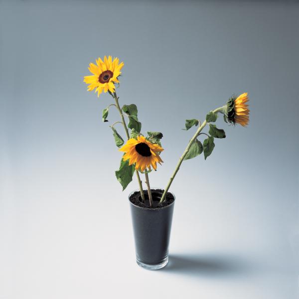 Earth flower vase by Martí Guixé